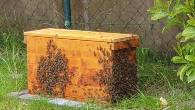 Biene, Blühwiesen —- MITMACHEN!